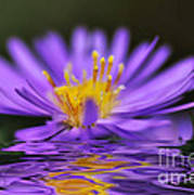 Mauve Softness And Reflections Print by Kaye Menner