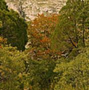 Mckittrick Canyon Trail Art Print