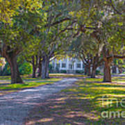 Mcleod Plantation Art Print