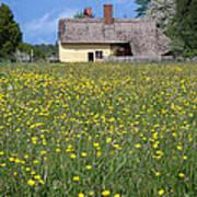 Meadow Cottage Art Print by Stephen Norris