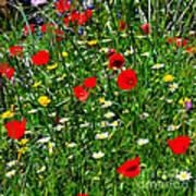 Meadow Flowers - Digital Oil Art Print