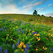 Meadow Gold Print by Mike  Dawson