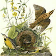 Meadow Starling Or Meadow Lark. 1. Male. 2 Art Print