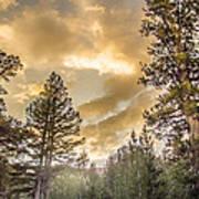 Meadow Sunset Gold Art Print