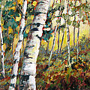 Meandering Woods Art Print