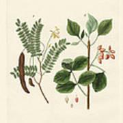 Medicinal Plants Art Print