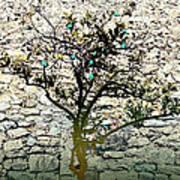 Mediterranean Garden With An Old Wall Art Print by Arsenije Jovanovic
