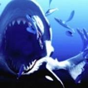 Megalodon Prehistoric Shark Art Print