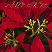 Mele Kalikimaka - Poinsettia  - Euphorbia Pulcherrima Art Print