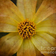 Mellow Yellow  2 Art Print