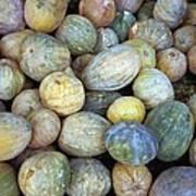 Melons In Sri Lanka Art Print