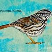 Melospiza Melodia Art Print