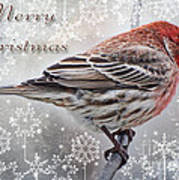 Merry Christman Finch Greeting Card Art Print