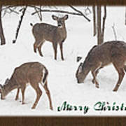 Merry Christmas Card - Whitetail Deer In Snow Art Print