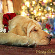 Merry Christmas From Lily Art Print