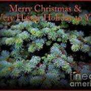 Merry Christmas And Happy Holiday - Blue Pine Holiday And Christmas Card Art Print