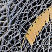 Mesquite Leaves Art Print
