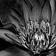 Metal Lotus Art Print