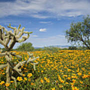 Mexican Golden Poppy Flowers And Cactus Art Print