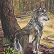 Mexican Gray Wolf Art Print by Caroline Owen-Doar