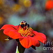 Mexican Sunflower Open House Party Time Art Print