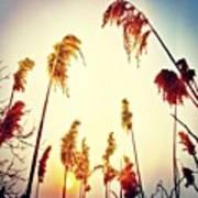 #mgmarts #sunset #bright #beautiful Art Print