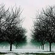 Michigan Cherry Trees In Winter Art Print