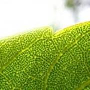 Micro Leaf Art Print