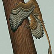Microraptor Gui, A Small Theropod Art Print