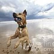 Mid-air Beach Dog Art Print by Eldad Carin