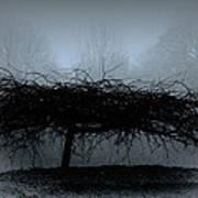 Middlethorpe Tree In Fog Blue Art Print