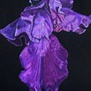 Midnight Iris Art Print