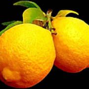 Midnight Lemons Art Print