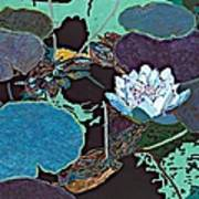 Midnight Moonglow Art Print