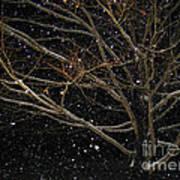 Midnight Snow Art Print