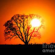 Mighty Oak Sunset Art Print