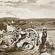 Mike Noon Monterey Whaler On Montereys Wharf  Circa 1890 Art Print