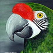 Military Macaw Art Print