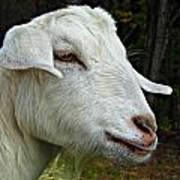Milkshakes The Goat Art Print