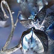 Milkweed In Blue Art Print