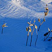 Milkweeds In The Snow Art Print