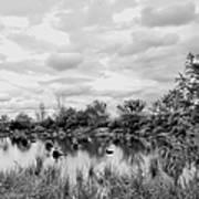 Mill Creek Marsh Serenity Art Print