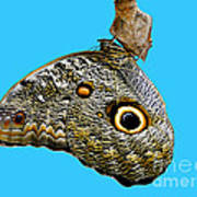 Mindo Butterfly Art Print by Al Bourassa