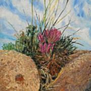 Mini Cactus Garden In Rock Art Print