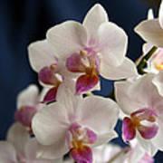 Mini Orchids 3 Art Print