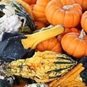 Mini Pumpkins And Gourds Art Print