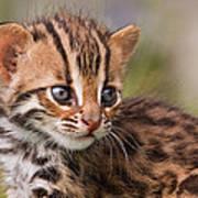 Miniature Leopard Art Print by Ashley Vincent