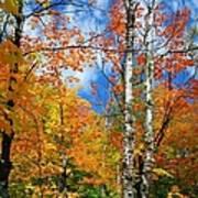 Minnesota Autumn Foliage Art Print