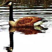 Mirrored Goose Art Print