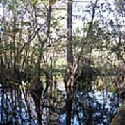 Mirroring The Swamp Art Print